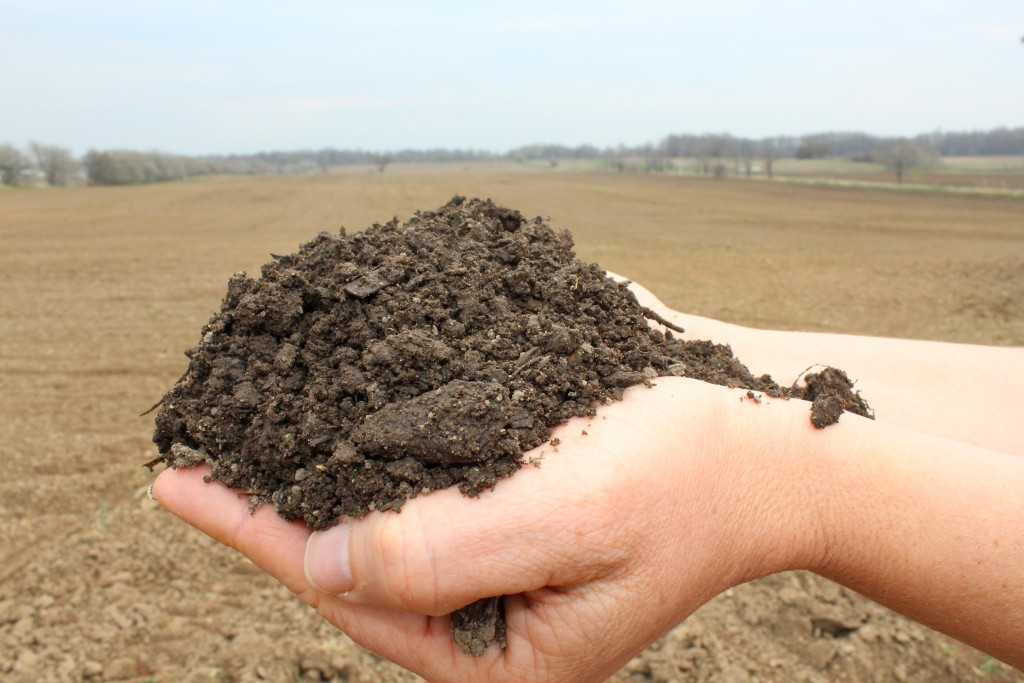 Image for titled: It's all about the soil