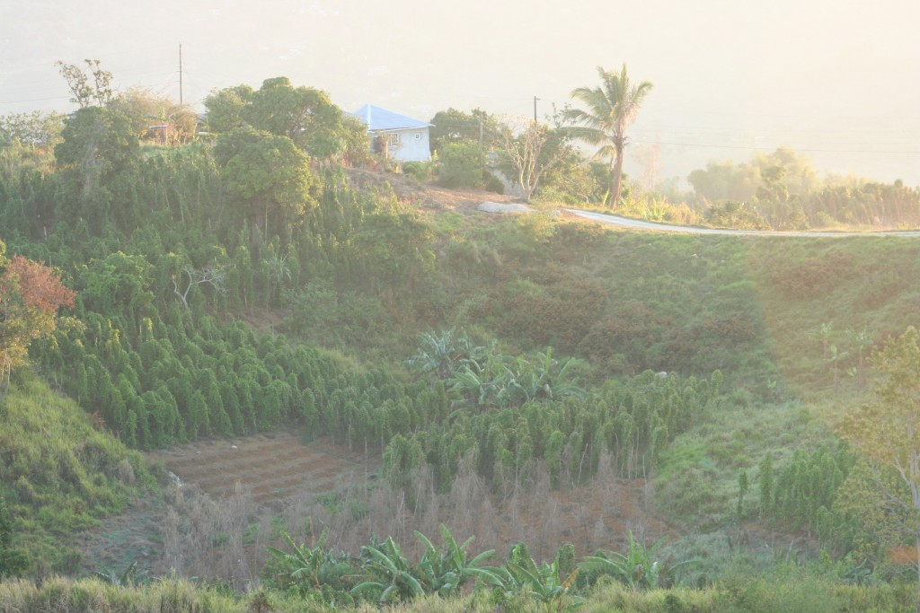 Typical mixed crop farm in the mountain morning mist
