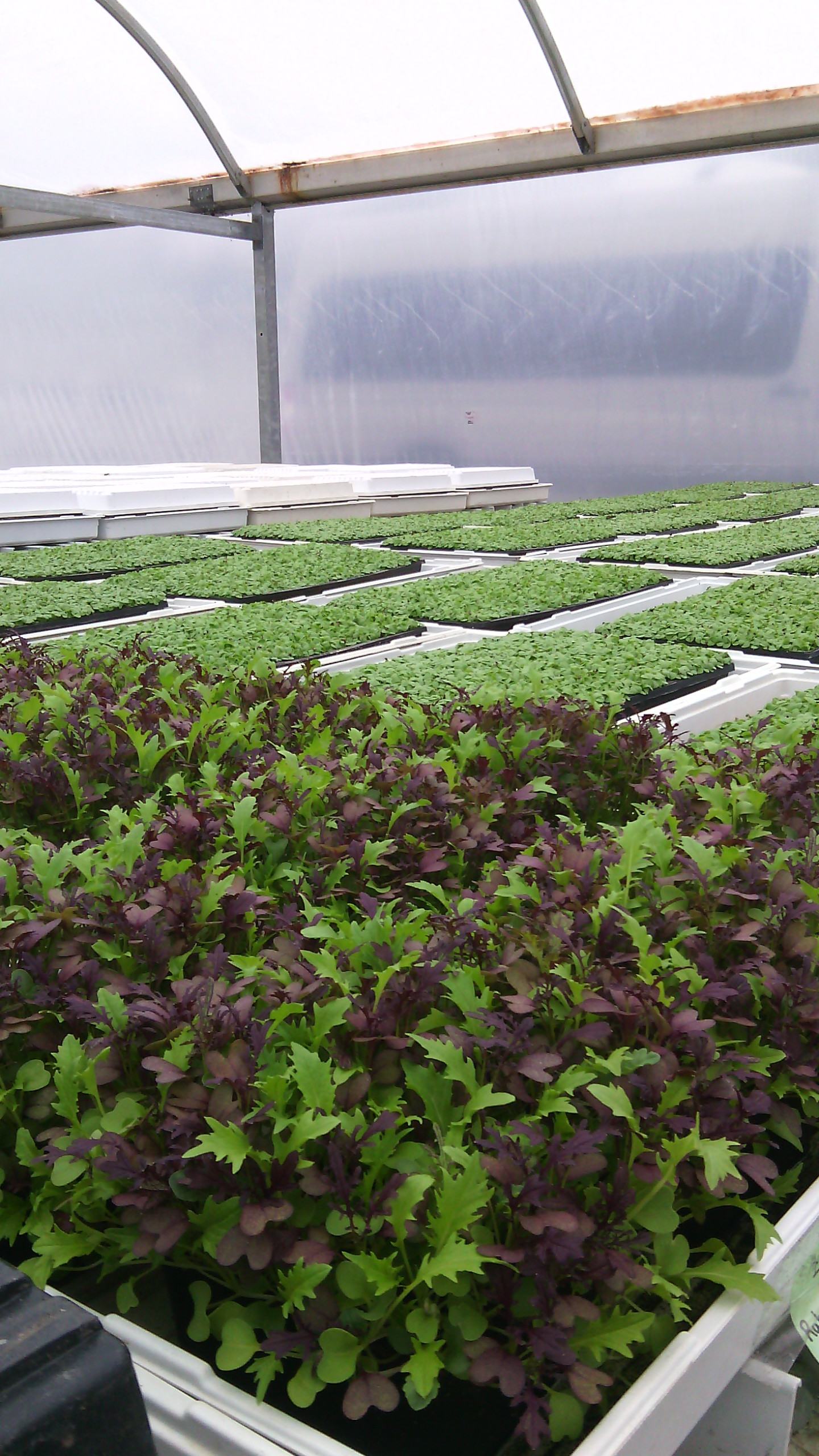 Plants That Grow In Complete Darkness Day Tripping To Slegers Greens Pfenning S Organic Farm