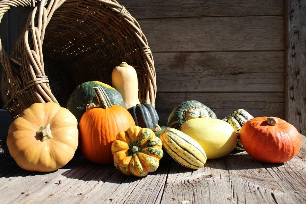 Image for titled: 12 Days of Local Food – Squash