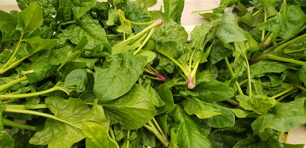 Image for titled: Overwintered Spinach