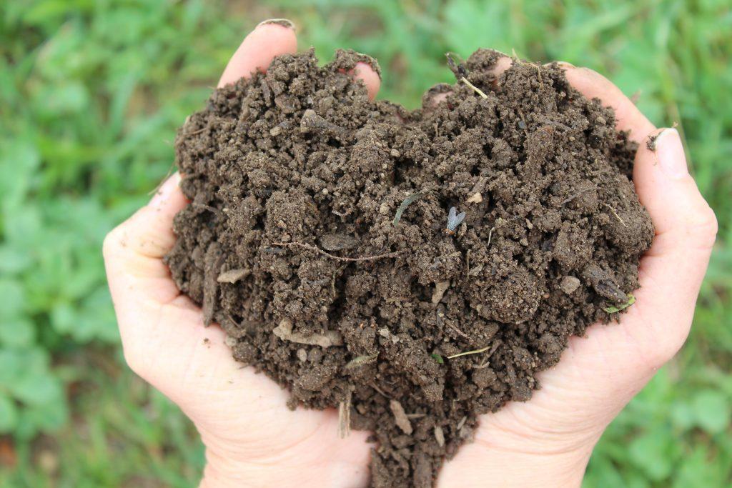 Healthy nutrient rich soil.