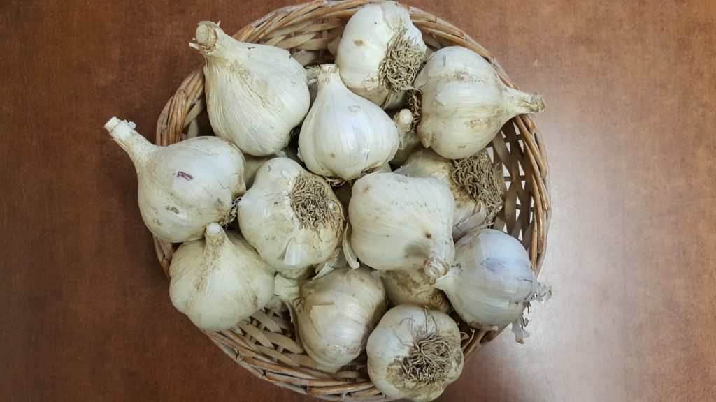 Image for titled: 12 Days of Local Food – Garlic
